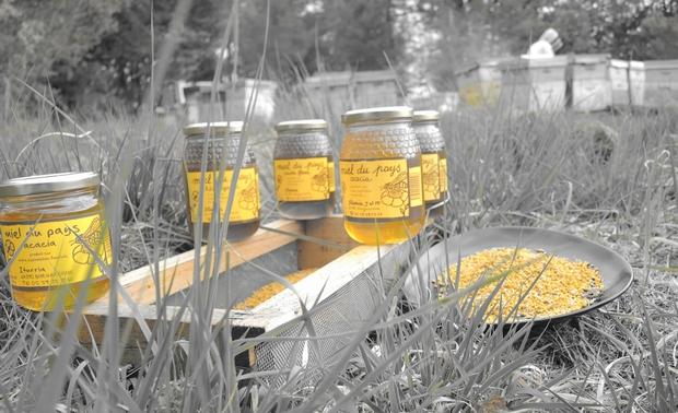 Pots de Miel - Apiculteur indépendant- sauvons les abeilles et filière apicole en consommant français
