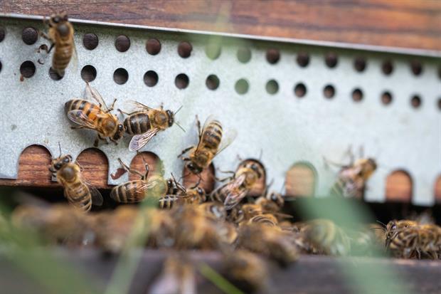 plage d'envol d'une ruche