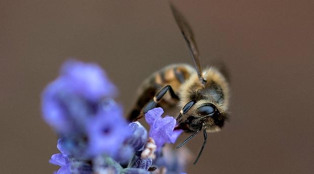 abeille Mon petit pot de miel