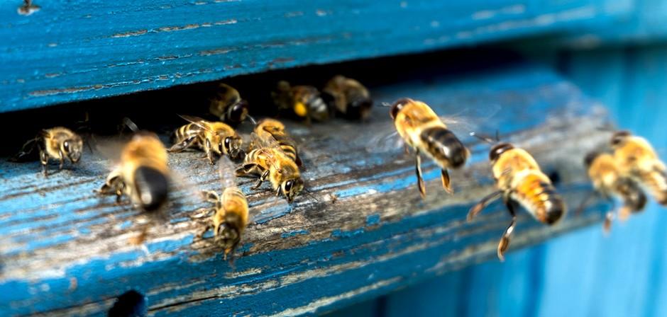 le miel un cicatrisant ancestral