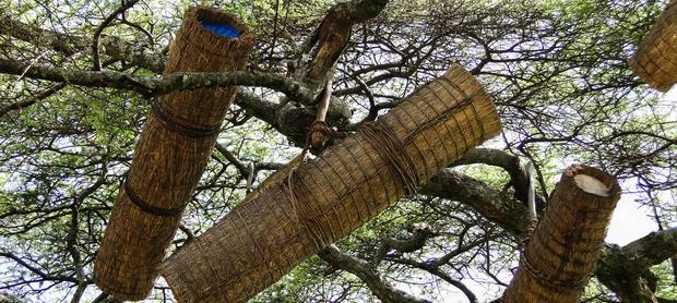 ruches dans les arbres en abyssinie